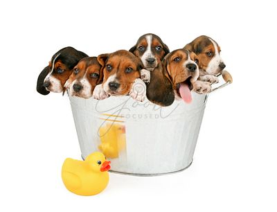 Litter of Puppies in a bathtub