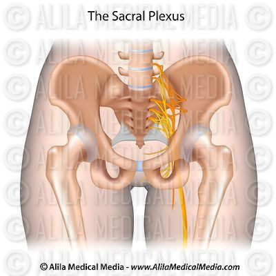 Alila Medical Media | Bones, Joints and Muscles Images