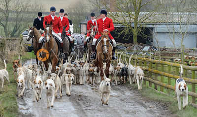 The Quorn and Cottesmore Hunts at the Quorn Kennels 11/2 photos