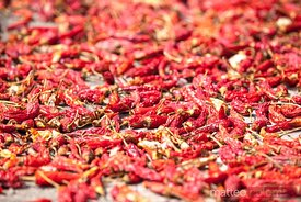 Red chili peppers drying outdoor