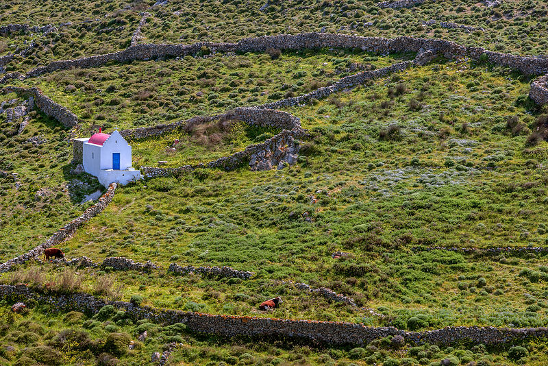 Small chapel in field, with two cows. Mykonos Island, Cyclades, Greece, April.