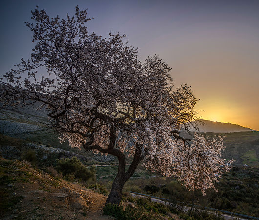 Spring sunrise in the Axarquia
