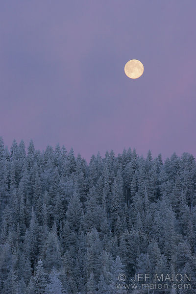 Full moon over the taiga