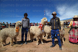 Winners of the baby alpaca category with their owners, Curahuara de Carangas, Bolivia