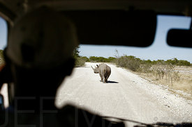 Rhinoceros and car