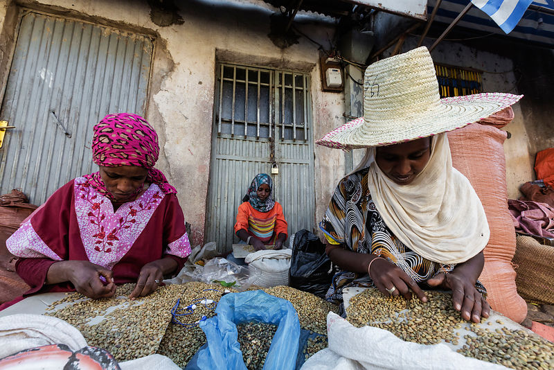 Women Sorting Through Coffee Beans