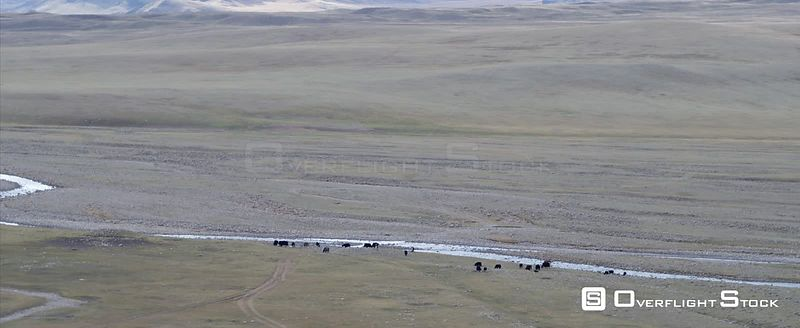 Drone Video Livestock South Gobi Mongolia