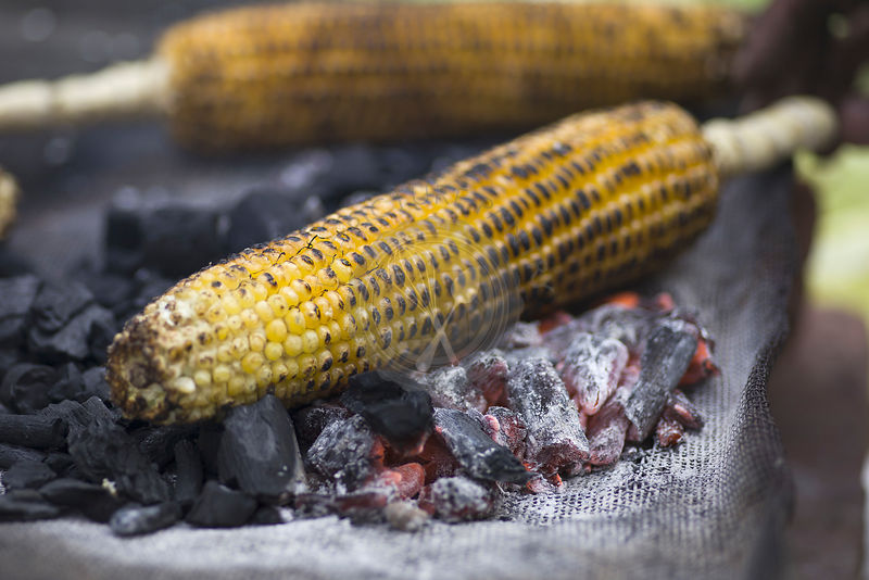 Indian Street food. Grilled Corn