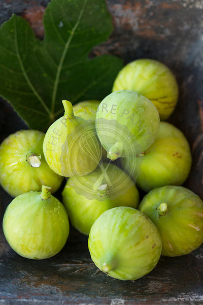 freshly picked green figs in square blue rustic dish, with late afternoon garden sun