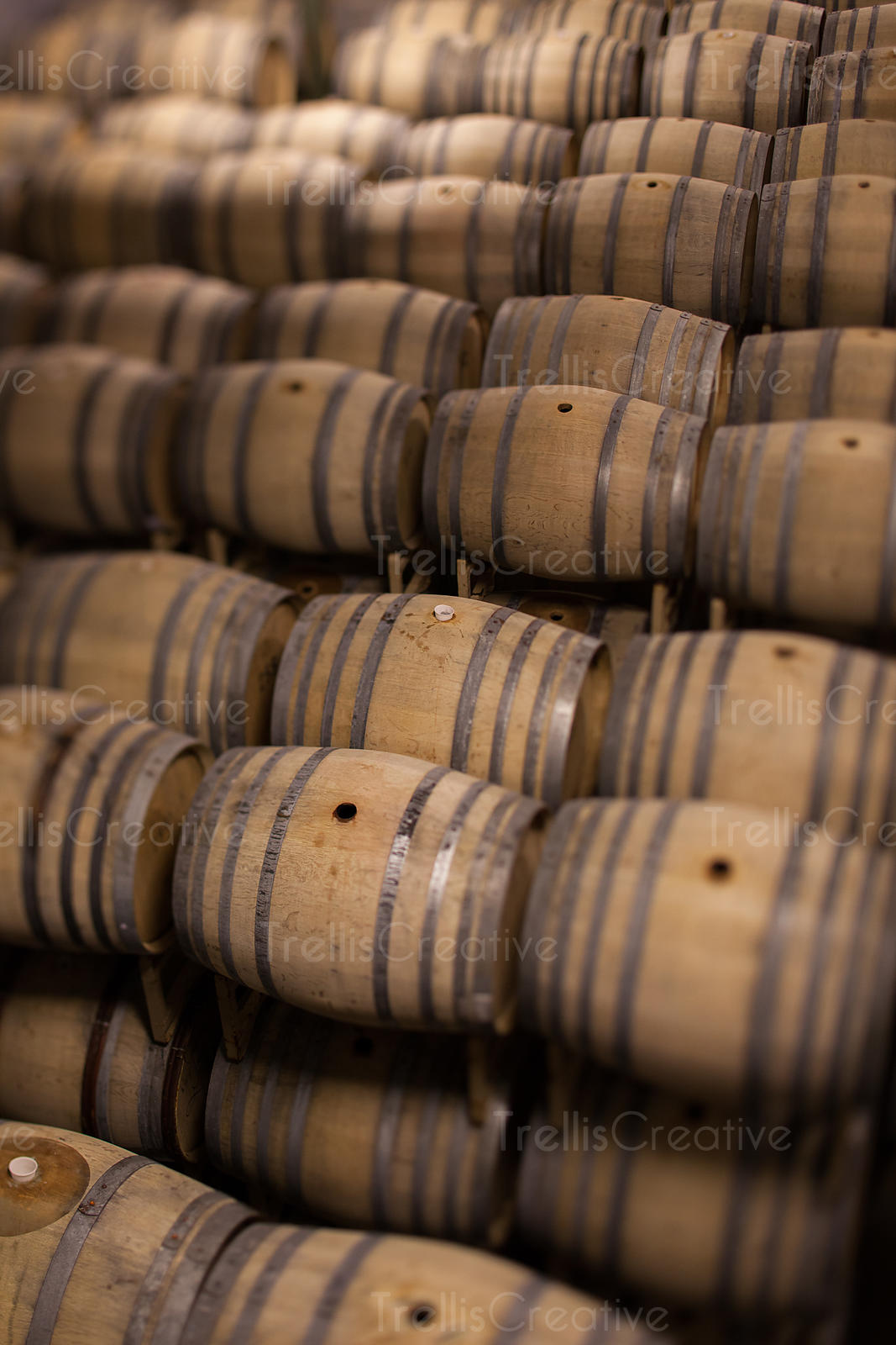 Winery cellar filled with stacked oak wine barrels.