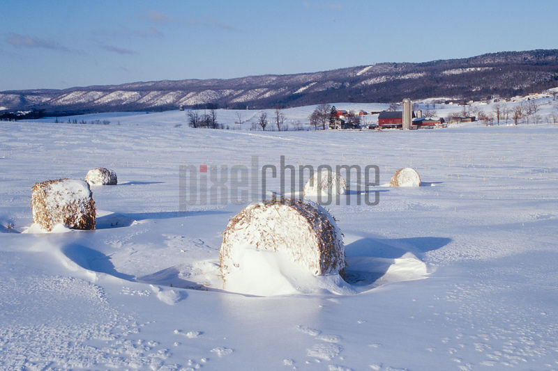 Hay Bales in Snow Covered Field
