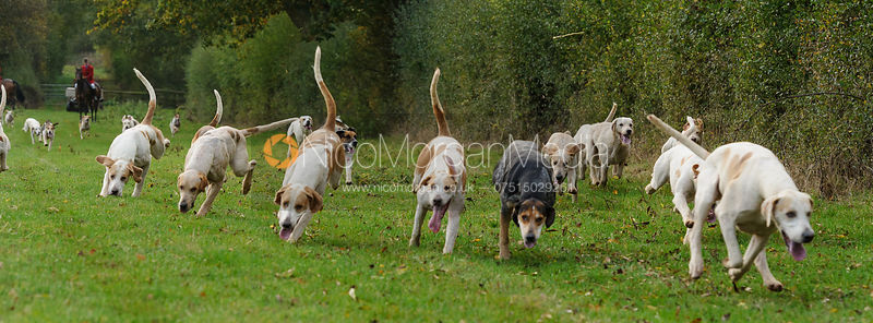 The Cottesmore Hunt at the kennels 23/10 photos