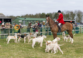 The Cottesmore foxhounds - Cottesmore at Garthorpe 3/3/13