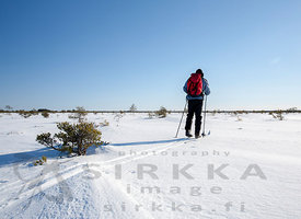 Skier on the Isosuo Mire