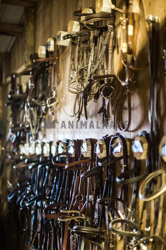 Horse Accessories photos