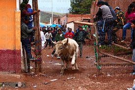 Villagers chasing a bull into main square at festival in Caquiaviri, Bolivia