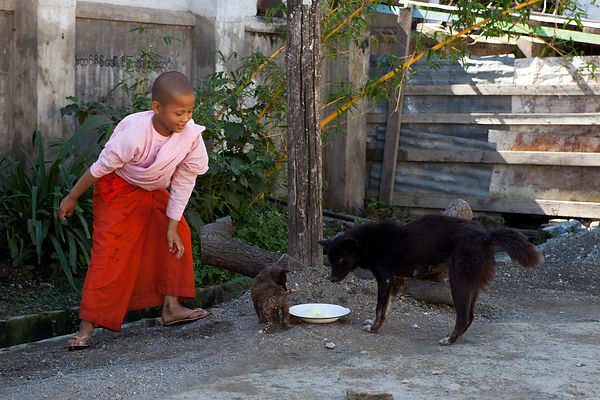Otama, nonne de 10 ans, prenant soin d'une chienne et de son petit chiot en leur donnant à manger devant le couvent, Nyaungshwe, Birmanie / Otama, a 10-year-old nun, caring of a dog and her puppy by feeding them in front of the convent, Nyaungshwe, Burma