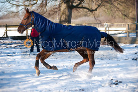 Horse wearing Polly Products equestrian rugs of different types.