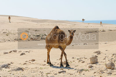 Sultanate of Oman Oman Stock images