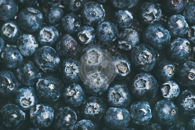 Fresh forest blueberry texture, wallpaper and background