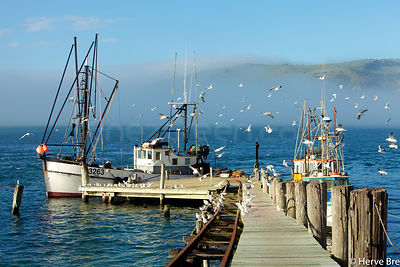 Fishing boats in New-Zealand