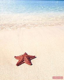 Red starfish on tropical beach in the Caribbean