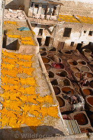 Treated leather drying at the tannery in the medina, Fes, Morocco; Portrait