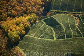 Aerial photograph of a Christmas Tree Farm in Southern Virginia.