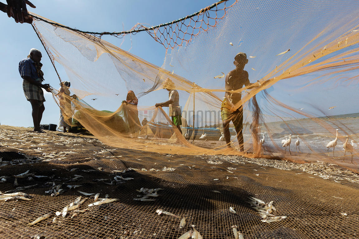 Fishermen Removing Fish Fry from their Nets