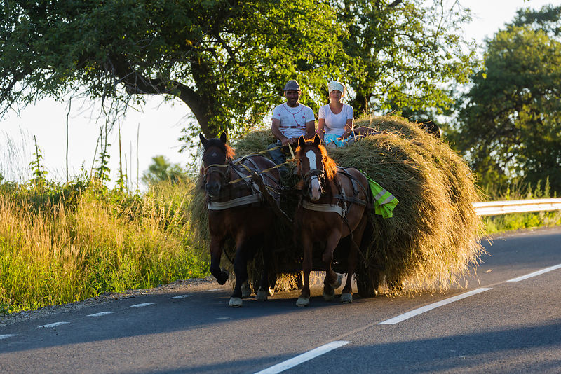 A Couple Driving a Horse Cart Loaded with Freshly Cut Hay