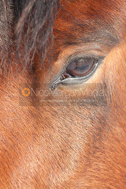 Close ups of a horse's head in a snowy field
