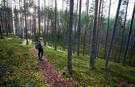 Trekker in Leivonmäki National Park