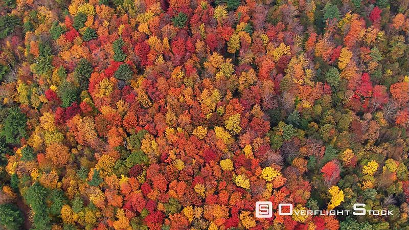 High orbit of woods in speCTacular fall color