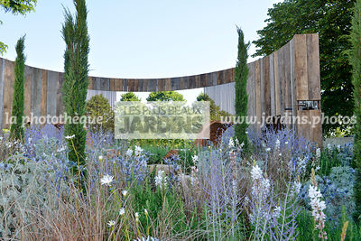 Jardin style champêtre : Cupressus sempervirens, Perovskia atriplicifolia 'Blue Spire', Eryngium bourgatii, Paysagiste : Mike Harvey (Arun Landscapes), Hampton Court, Angleterre