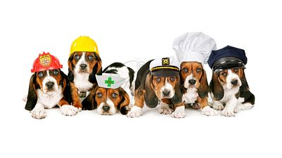 Row of Puppies Wearing Work Hats
