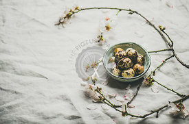 Easter quail eggs and blooming almond tree branches, copy space