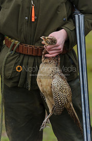Game shooting images - hand holding a hen pheasant