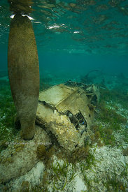 Japanese Zero fighter aircraft underwater in shallow water off Palau, Federated States of Micronesia