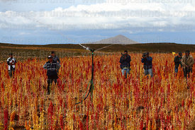 People watching demonstration of a sprinkler irrigation system in quinoa field, Oruro Department, Bolivia