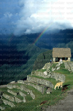 Llama (Lama glama), Watchmans Hut and rainbow over Urubamba canyon, Machu Picchu, Peru