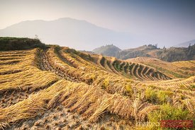 Terraced rice paddy, Longsheng, Guilin, China