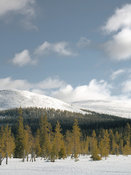 Spruce trees and snowcapped hills
