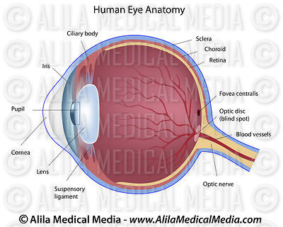 Eye anatomy labeled diagram