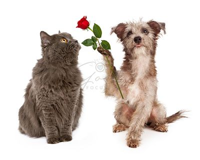 Cute Dog Giving Flower To a Cat