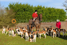 Huntsman John Holliday and the Duke of Rutland's hounds