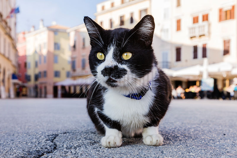 Feral cat crouched in town square