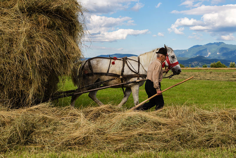 Portrait of Ioan Leading a Horse-Drawn Cart Loaded with Freshly Cut Hay
