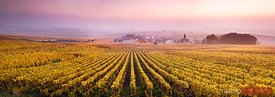 Vineyards in the mist at sunrise, Oger, Champagne, France