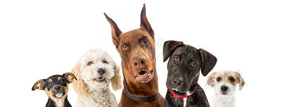 Dogs of Various Sizes Close-up Web Banner