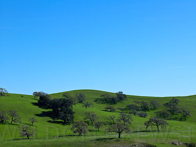 SB_Wine_Country_Mar10_028